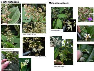 guia plantas.v2.pptx